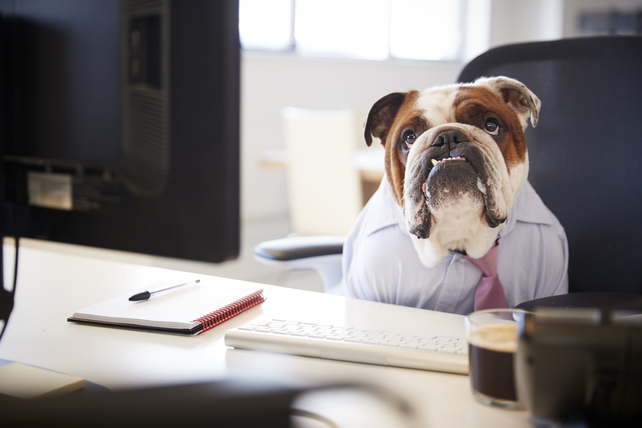 Image of a dog in a suit and tie at a desk.