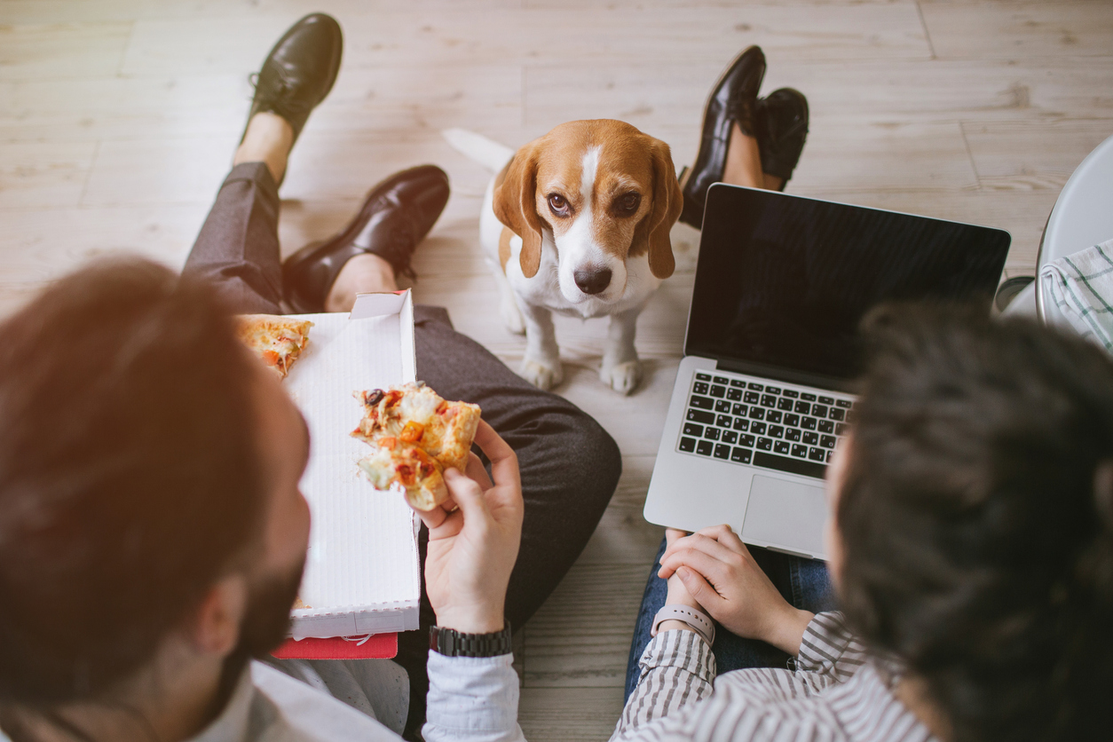 Image of dog looking at owners eating pizza and working on a laptop.
