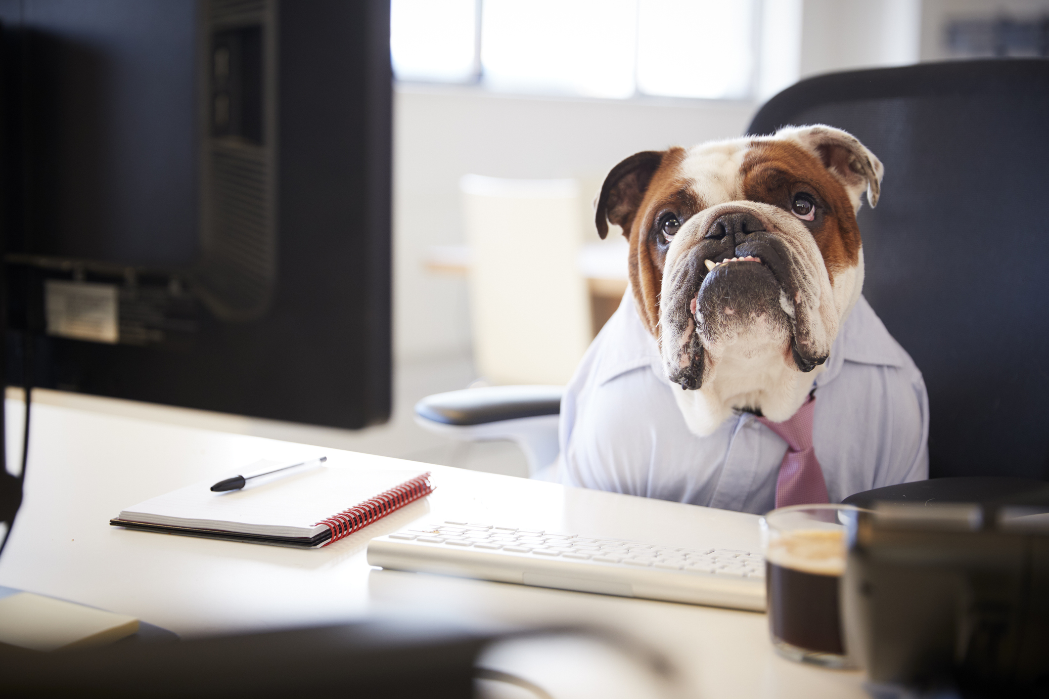 Picture of dog in a shirt and tie sitting at a desk.